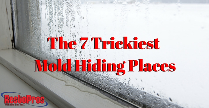 The 7 Trickiest Mold Hiding Places Restopros