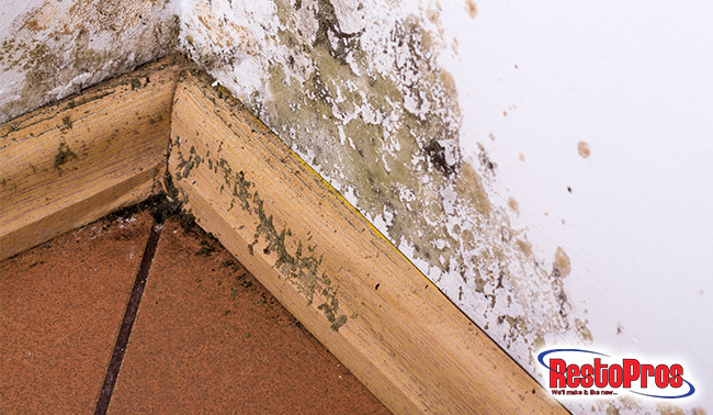 8 Best Mold Prevention Products For Your Home