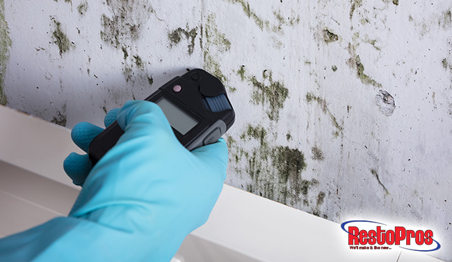 3 Ways To Test For Mold In Your Home