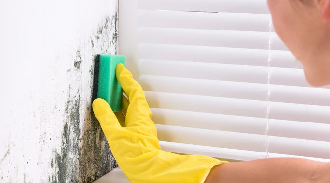 cleaning tips to prevent mold