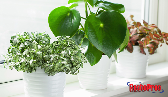 prevent mold growth from houseplants