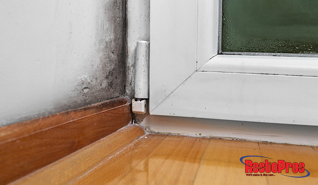 facts you should know about mold