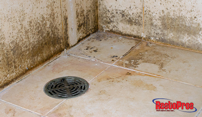 the hidden horrors of mold
