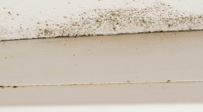 Can Mold Grow in the Winter