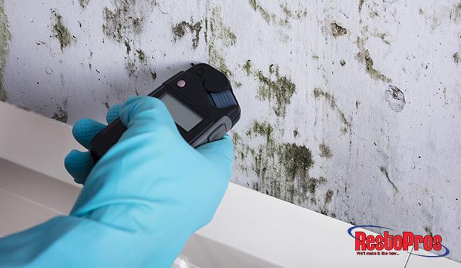 At-Home Mold Kits vs Professional Mold Testing