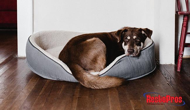 pets, mold, pet exposure to mold, dangers of pet mold exposure, mold exposure