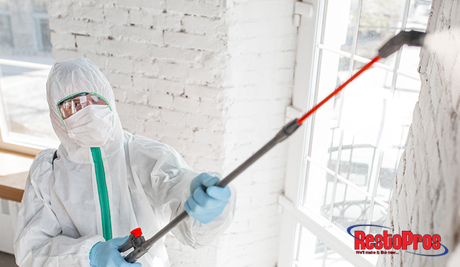 mold, mold remediation, mold specialists, mold growth, home mold, mold in my house